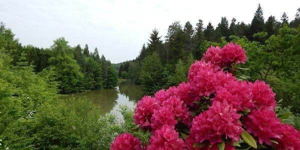 Budafai arborétum a tavaszi virágzáskor