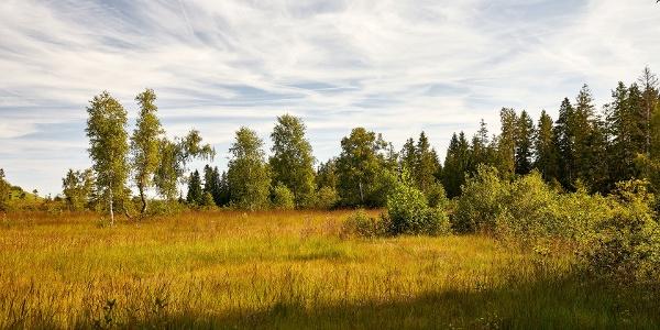 Herbstliches Moor beim Mettilimoos