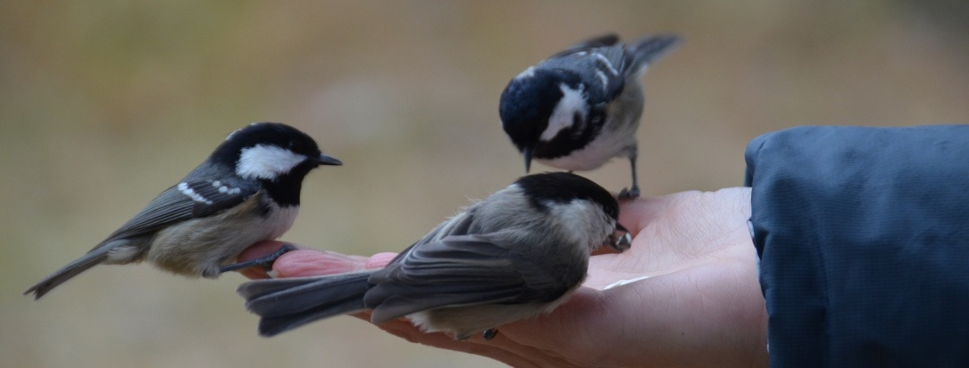 Feeding birds in Val Roseg