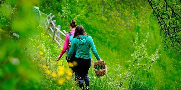 Sentiero delle erbe