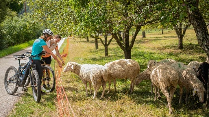 Vorbei an Schafweiden