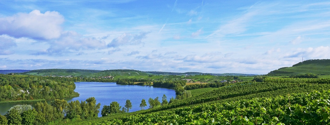 Wine, Land, River: Cycling Paradise Baden-Wuerttemberg