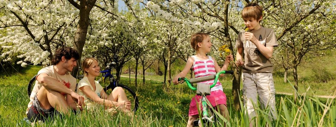 Kirschblütenradweg
