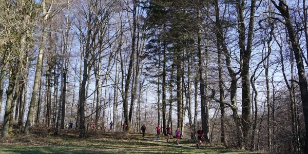 BODENSEE TRAILS Trailrunning Camp
