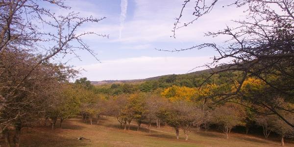 Hagyományos legelő az agostyáni ökofaluban