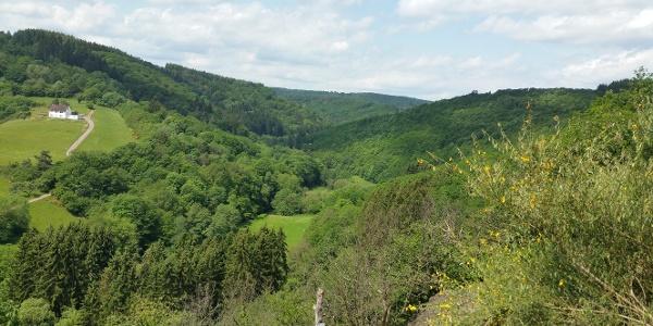 Aussicht Sauerseifen im Tal der Kleinen Kyll
