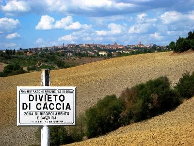 Blick zurück auf Siena
