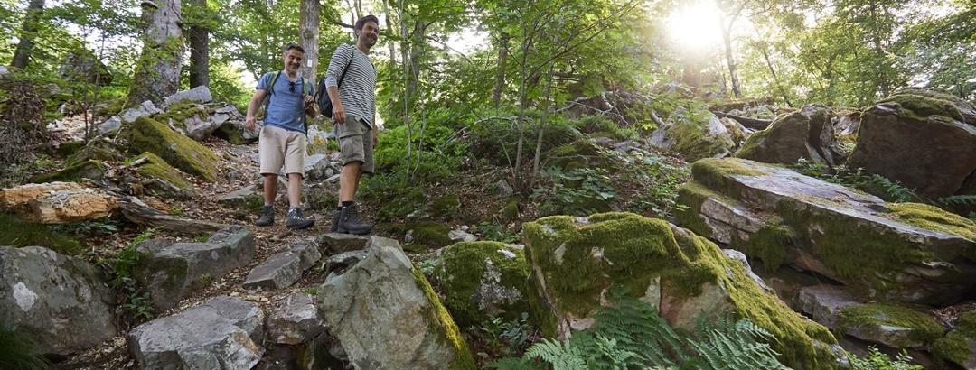 Erlebnis Nationalpark Hunsrück-Hochwald