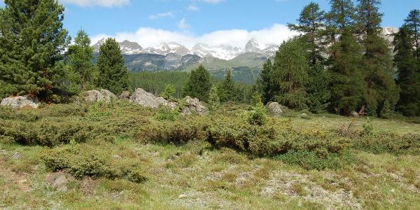 plain of Alp da Staz