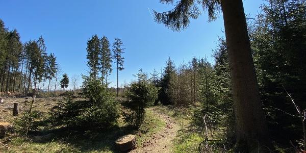 Waldpfade auf dem A1
