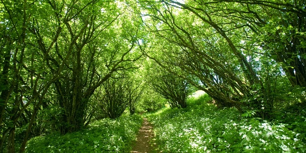 Wald Eifelfrühjahr