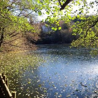 Ritzebühler Teich mit Goetheschule