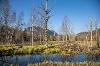 Der Moorpfad in Pfronten - @ Autor: Julian Knacker - © Quelle: Pfronten Tourismus