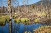 Eine Bieberburg am Moor- und Streuwiesenpfad in Pfronten - @ Autor: Julian Knacker - © Quelle: Pfronten Tourismus