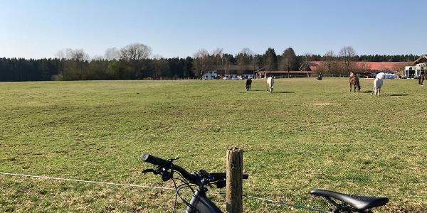 Die Pferdekoppel vom Weberhof