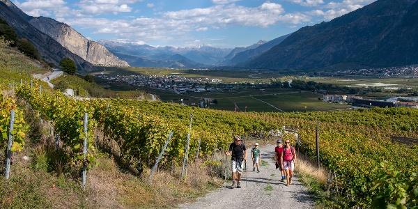 Depuis la plaine, le chemin monte en pente douce à travers le vignoble de Saillon