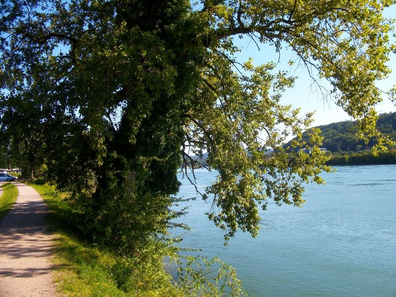 Waldshut-Tiengen: Rheinpromenade