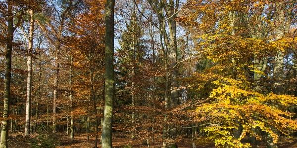 Schleifenroute - im nördlichen Forst Planken