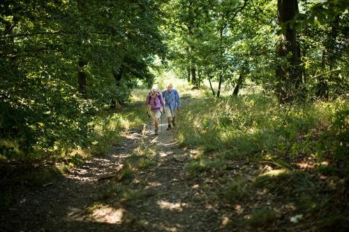OT 4 - Rundweg um Ottlar, vorbei an der Niegelscheid Schutzhütte