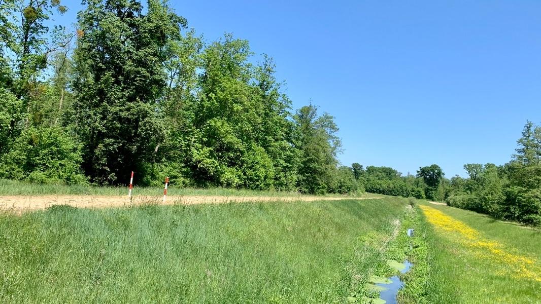 Ins Hanauerland und durch das Naturparadies Korker Wald