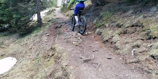 Wurzelpassagen Prätschlialp Trail
