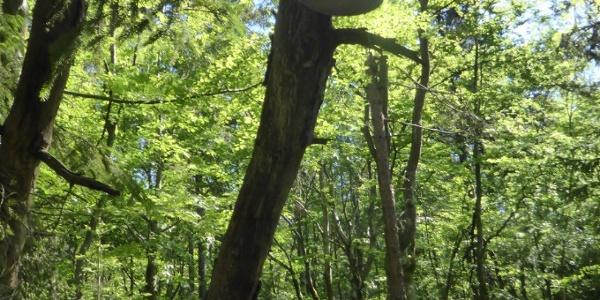 Der Schuhbaum auf dem Weg zum Wackelstein