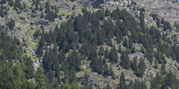 Die historischen Partschinser Bergbauernhöfe
