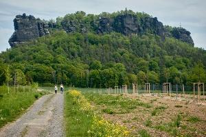 Foto Der neu gestaltete Weg zum Lilienstein in Königstein-Ebenheit