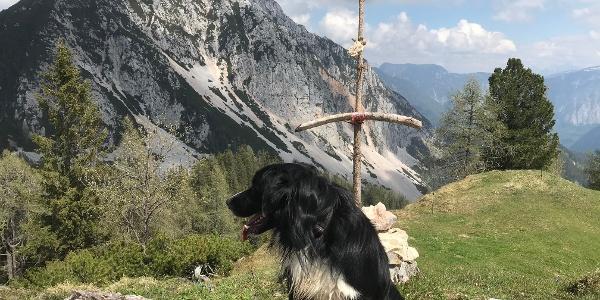 Am Gipfel der Hohen Scheibe mit Blick auf den Plassen