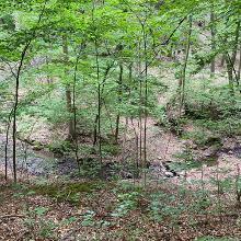 Blick vom Wanderweg an der oberen Hangkante zum Tännichtgrund