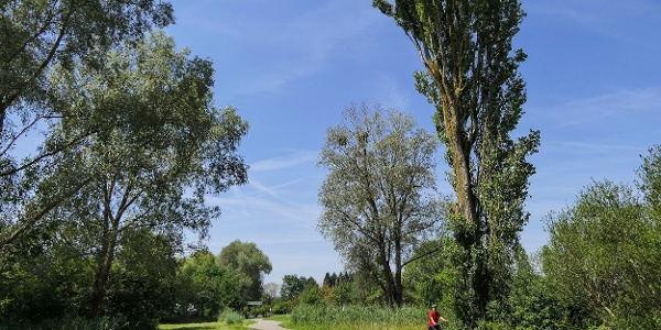 Bodensee Radweg