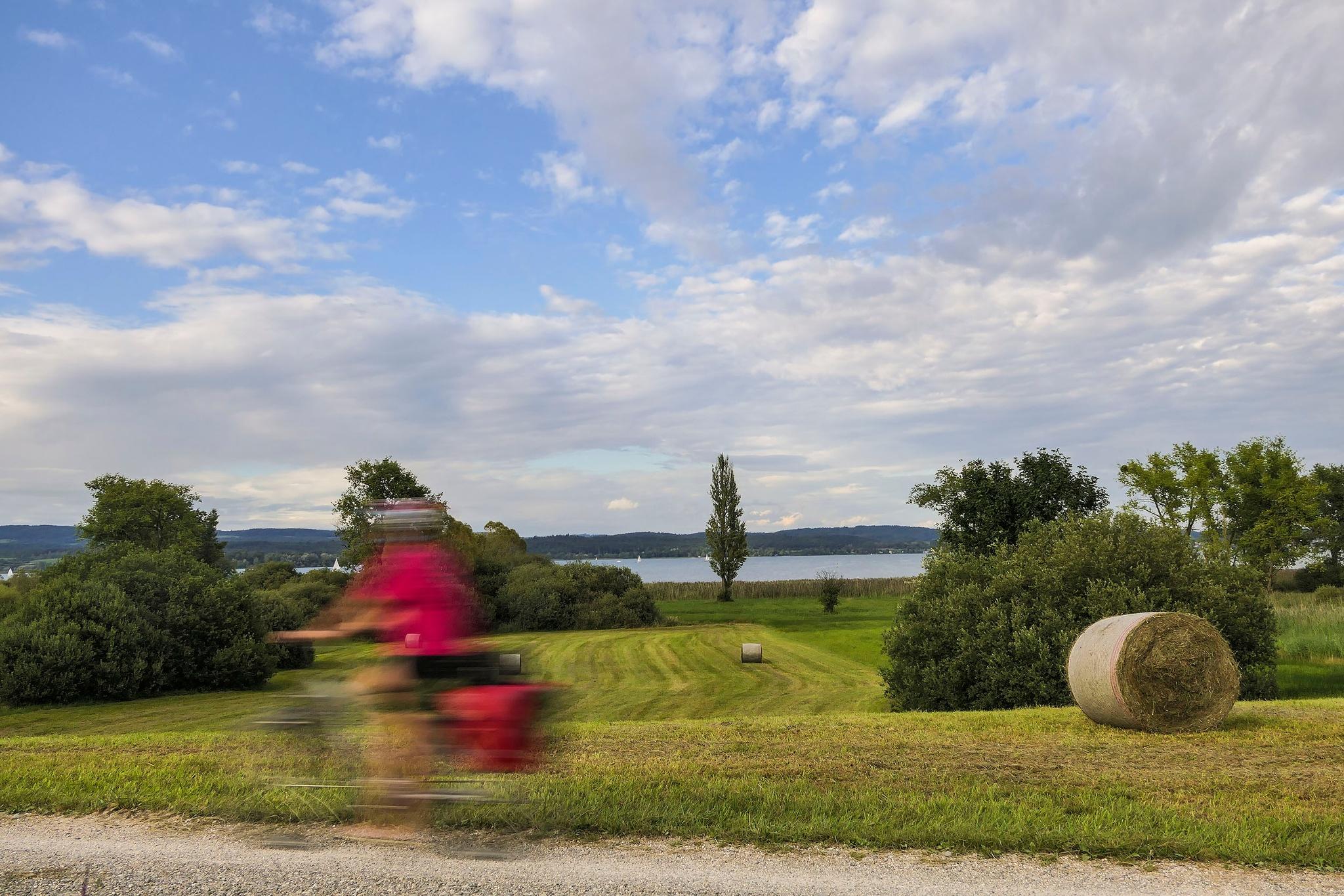 Bodensee Radweg zwischen Horn und Iznang