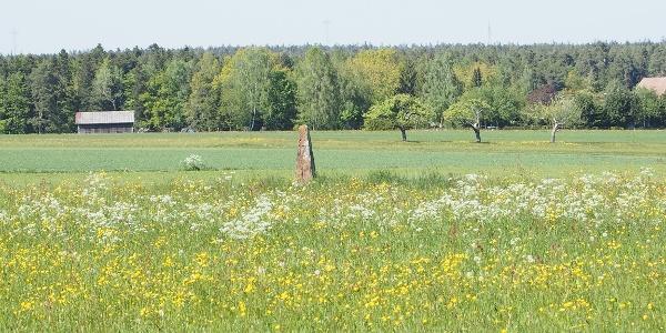 Wald, Felder und bunte Wiesen