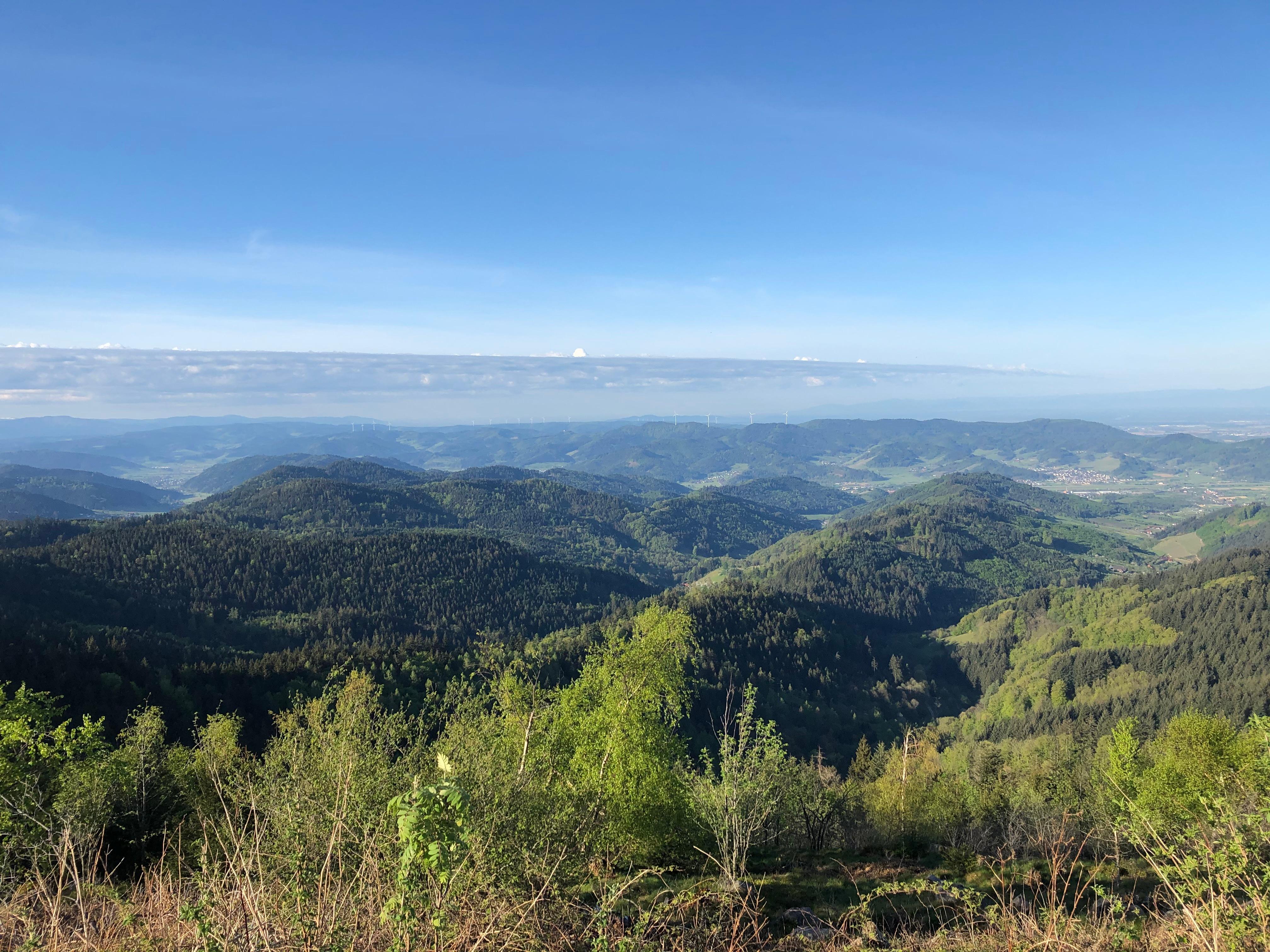 Tolle Aussicht in Richtung Rheintal / Vogesen