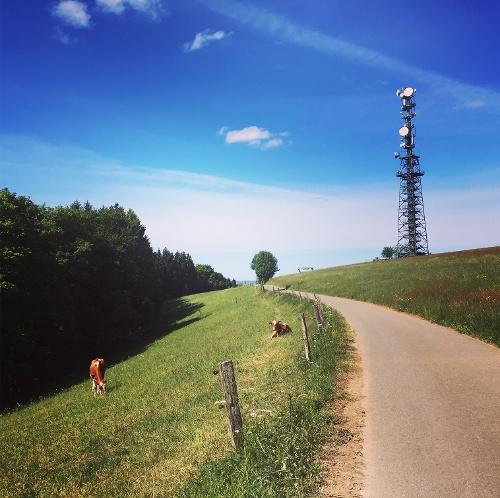 Über Schomberg und Schlubberbruch zum Schluchtwald Müggenholl