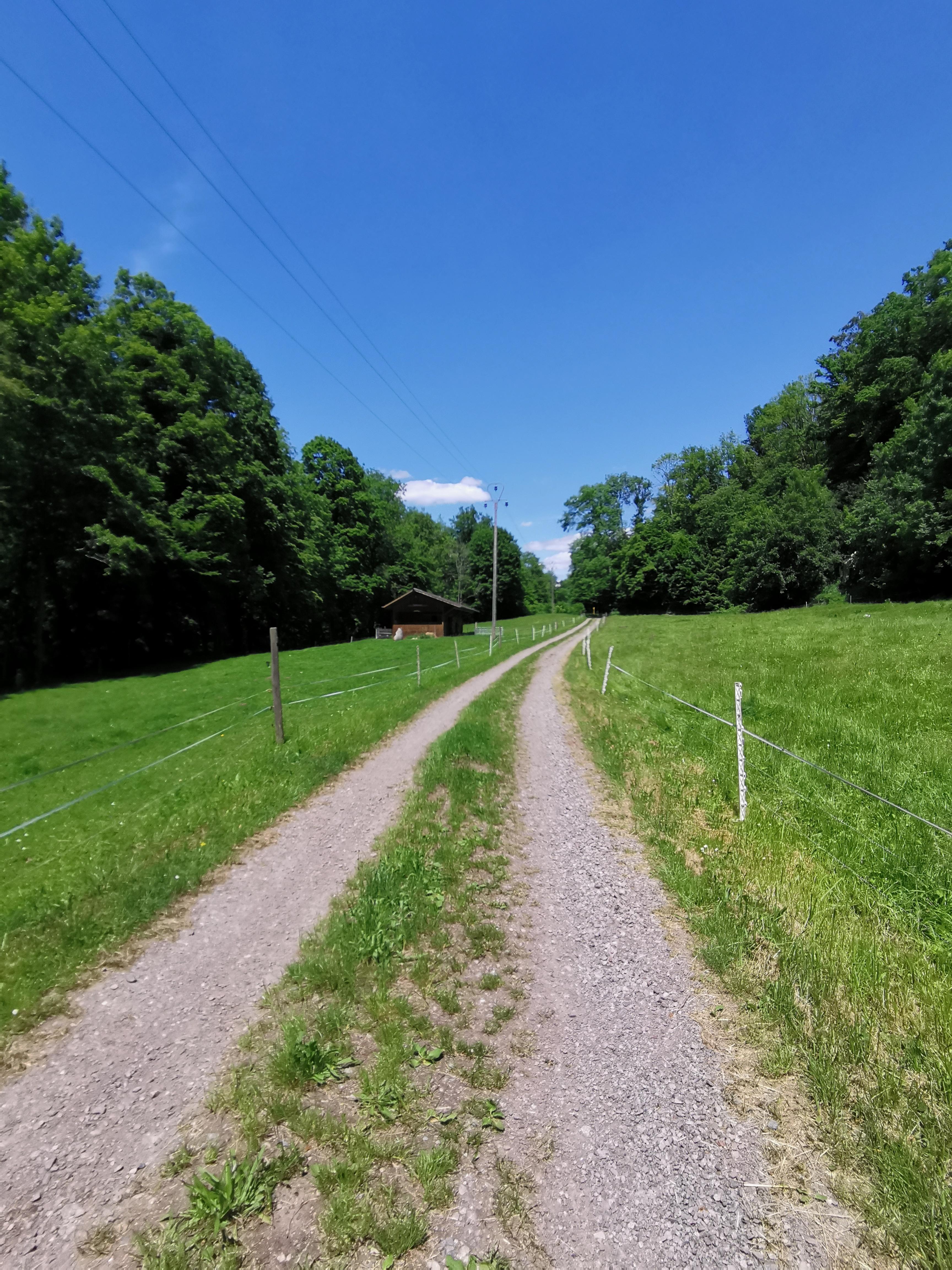Auf dem Weg von Gurtweil nach Gutenburg