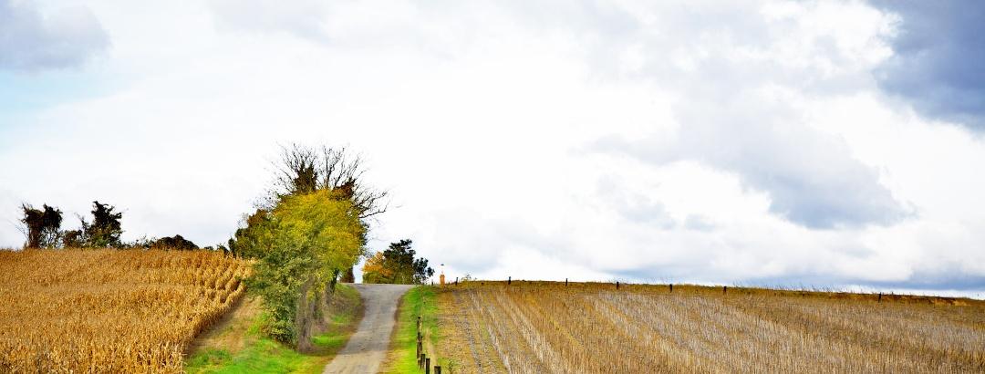Chemin champêtre vers Encausse, dans le Gers