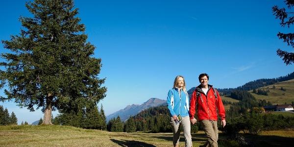 Wandern auf dem Hochmoor am Häderich