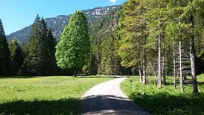 Weg zur Rotmoos Alm (u.a. Plansee Runde, Frieder)