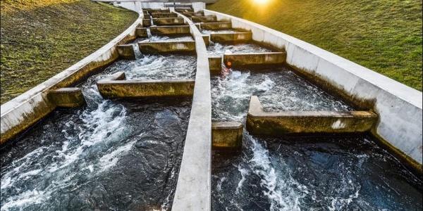 EDF : Passes à poissons