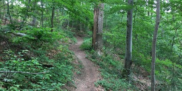 Trail Richtung Heiligenberg