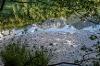 Seerosen am Alatsee - @ Autor: Julian Knacker - © Quelle: Pfronten Tourismus