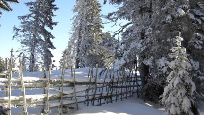 """Winterlandschaft"""