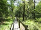 Holzsteg in den Ebbemooren