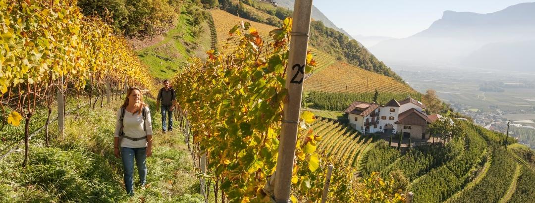 Hiking through a vineyard