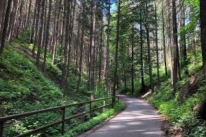 Foto Weg vom Lichtenhainer Wasserfall nach Lichtenhain