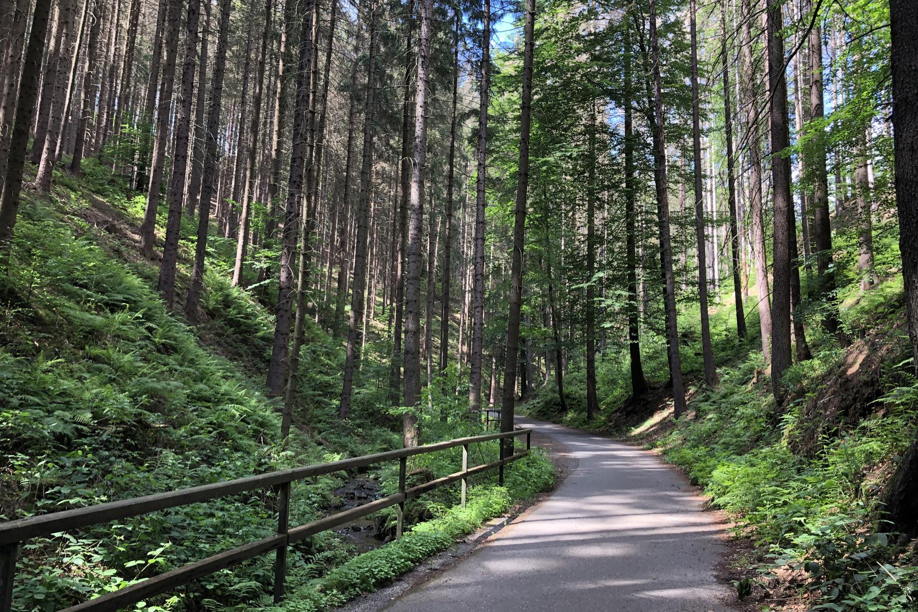 Weg vom Lichtenhainer Wasserfall nach Lichtenhain