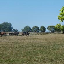 Edle Pferde auf den Weiden