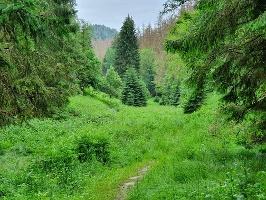 Foto Das idyllische Tal nahe dem Kleinstein