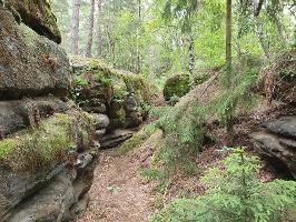 Foto Märchenhafte Landschaft auf dem Forststeig zum Labyrinth